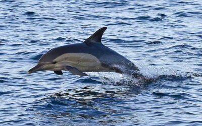 KZN's Spectacular Sea Life